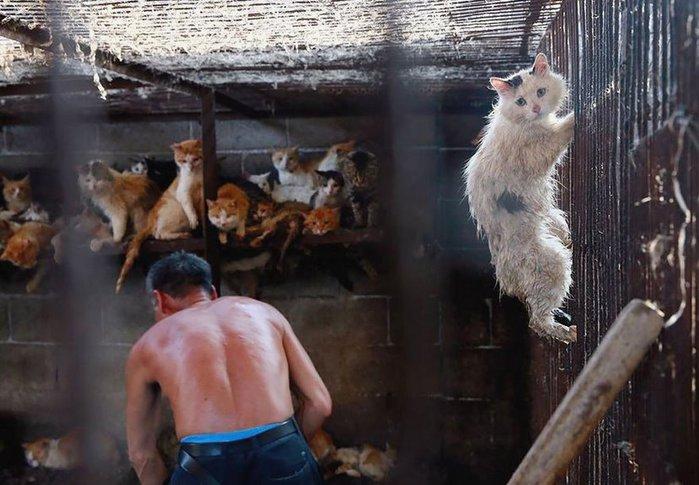 Как убивают бродячих котов в Китае