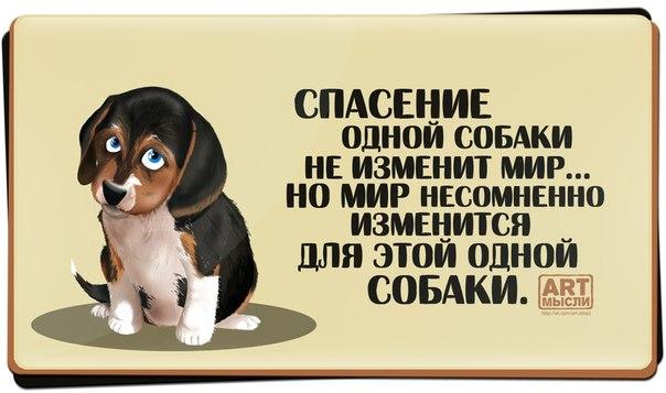 У собак лишь один недостаток — они верят людям.