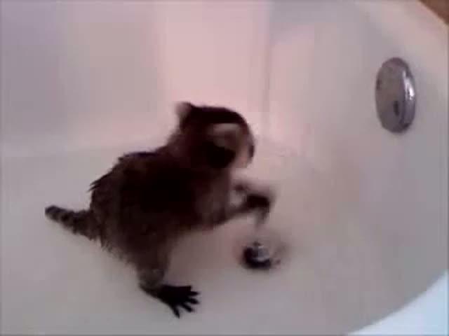 Енотик в ванной