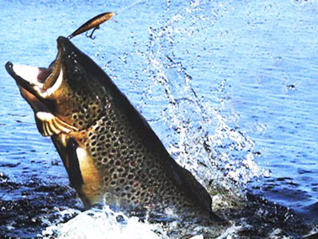 на что ловить в на озерах в калининграде
