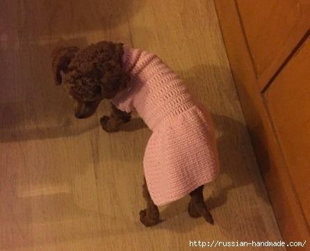 Вяжем крючком одежку для собачки (4) (446x361, 91Kb)