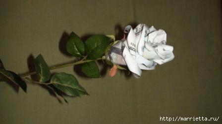 Денежные розы (15) (448x252, 38Kb)