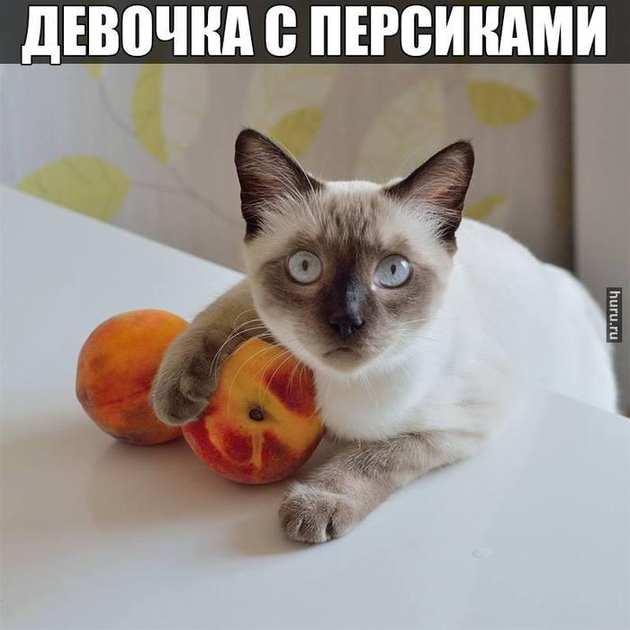 http://chefeat.ru/shop/dieticheskie-desertyi//3855635_10599598_360096157473718_8850224954442418634_n (700x700, 41Kb)