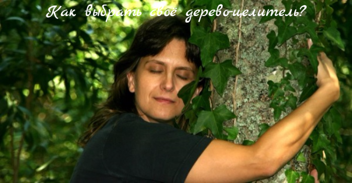 "alt=""Как выбрать своё дерево-целитель?""/2835299_Kak_vibrat_svoyo_derevocelitel (700x364, 493Kb)"