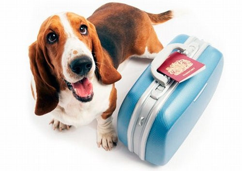 правила перевозки домашних животных в самолете/4171694_pravila_perevozki_jivotnih (500x353, 41Kb)