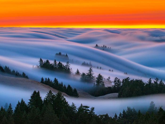 3925073_fog (700x525, 60Kb)