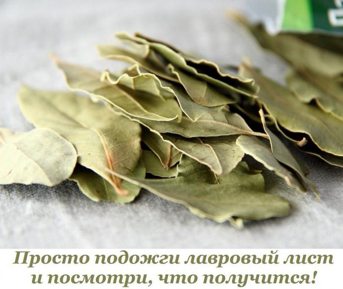 5365358_Prosto_podojgi_lavrovii_list_i_posmotri_chto_polychitsya (700x590, 241Kb)