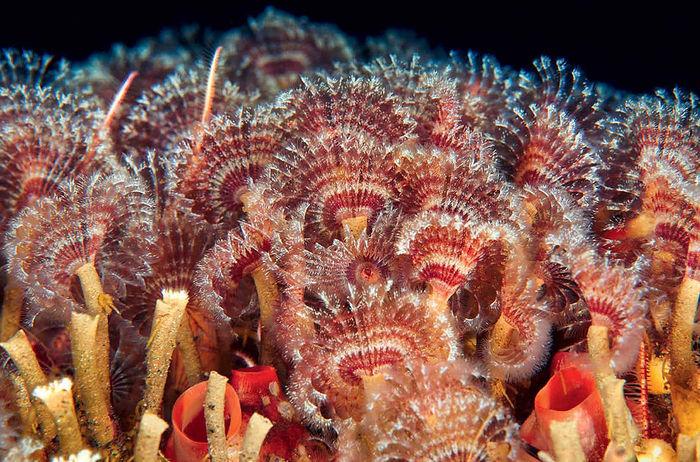 Морские обитатели холодных морей