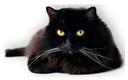 logo-cat (128x80, 16Kb)