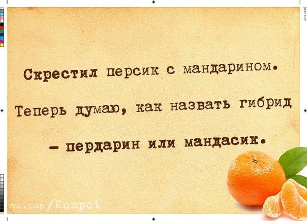 5672049_1419786284_frazochki6 (604x436, 61Kb)
