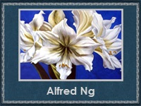 5107871_Alfred_Ng (200x150, 17Kb)