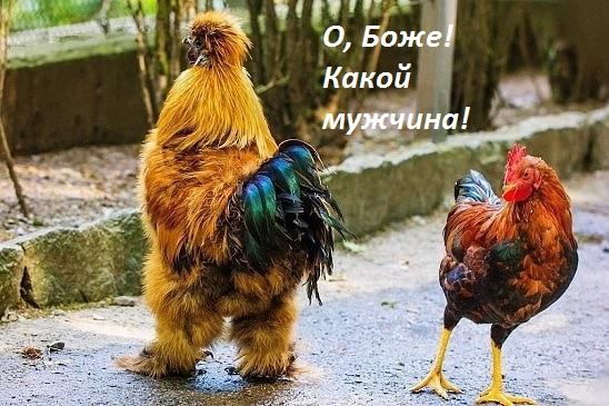 4111563_o_boje_kakoi_myjchina_1_ (548x365, 100Kb)