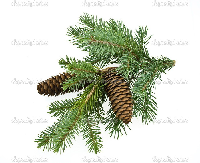 depositphotos_3857676-Fir-tree-branch-with-cones (700x572, 117Kb)