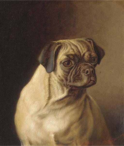 a pug (512x600, 35Kb)