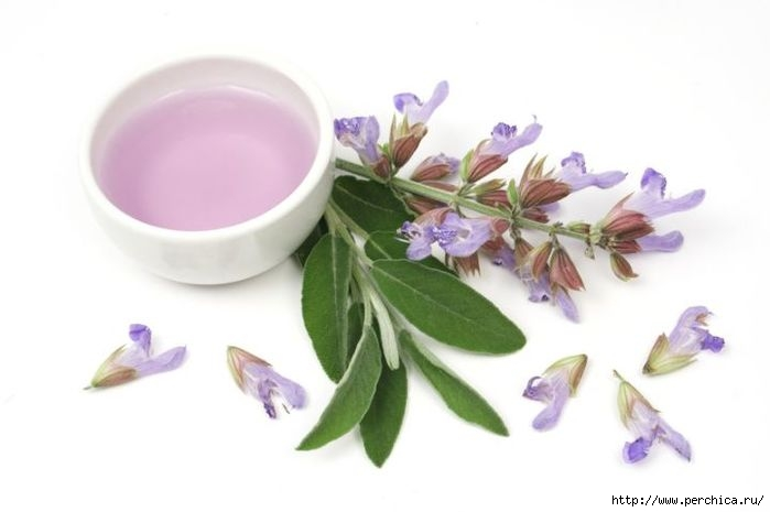 4979645_sage_essential_oil_dreamstime (700x465, 82Kb)