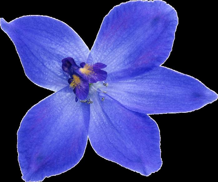 комнатные цветы и растения