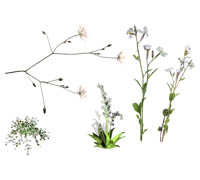 цветылек (200x180, 23Kb)