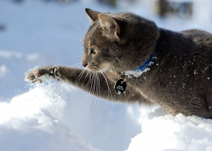 marvelous_cats_having_a_blast_in_the_snow_640_09 (700x497, 260Kb)