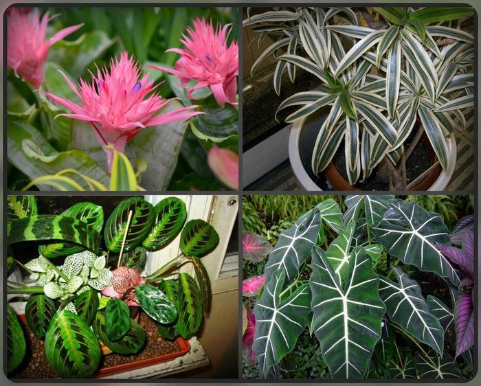 Комнатные растения для восточного окна (700x562, 162Kb)