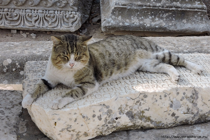 Shraddha_trаvel Турция 2016 (715) (700x466, 347Kb)