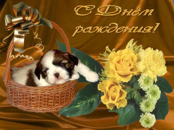 С ДНЕМ РОЖДЕНИЯ щенок в корзиночке и букет желт.цветов (600x449, 204Kb)