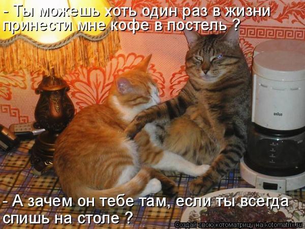 3802547_kot_i_kofe1 (600x450, 181Kb)