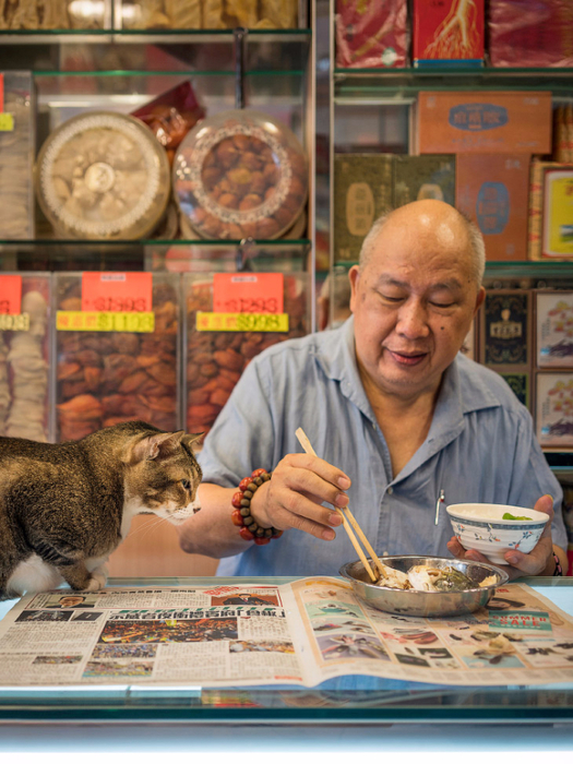 кошки в магазинах фото 2 (525x700, 440Kb)