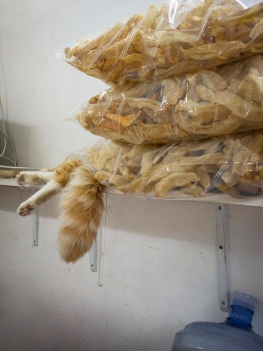 кошки в магазинах фото 8 (525x700, 362Kb)