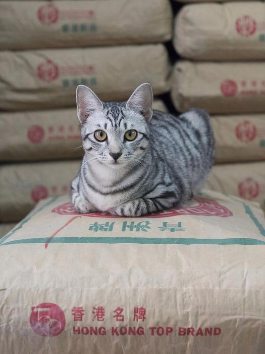 кошки в магазинах фото 10 (525x700, 337Kb)
