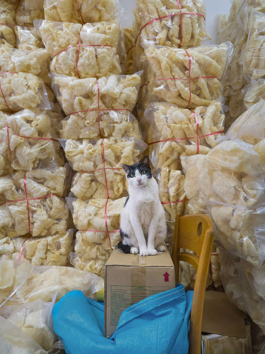 кошки в магазинах фото 12 (525x700, 487Kb)