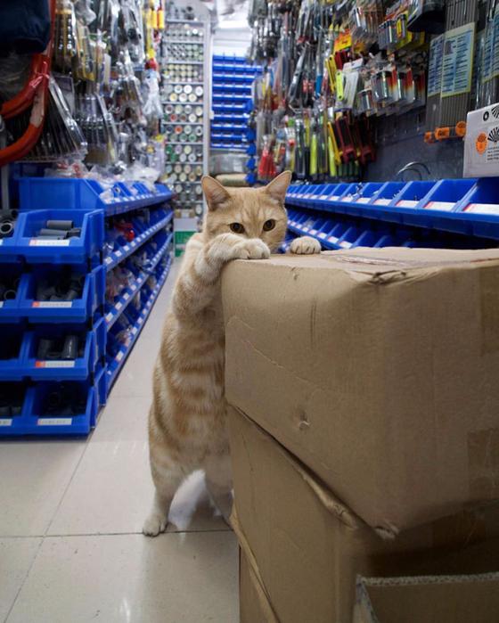 кошки в магазинах фото 15 (560x700, 425Kb)