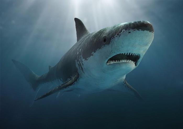 акула (700x494, 154Kb)