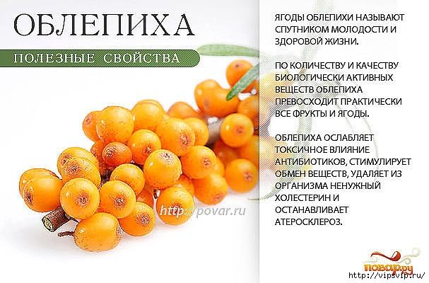 5745884_oblepiha (607x400, 176Kb)