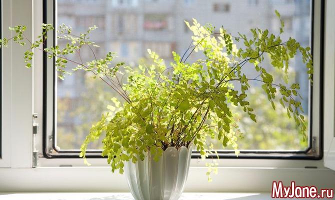 Топ-10 полезных растений для дома. Срочно посадить!