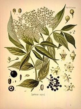 Растения, которые на Руси считались магическими
