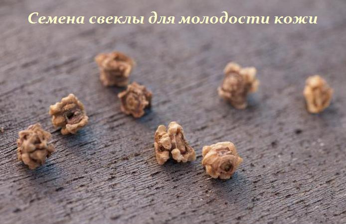 2749438_Semena_svekli_dlya_molodosti_koji (694x450, 377Kb)