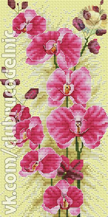 Resplendent Orchid (350x700, 217Kb)