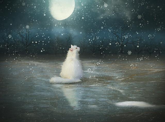Белая кошка_снег34 (640x477, 254Kb)