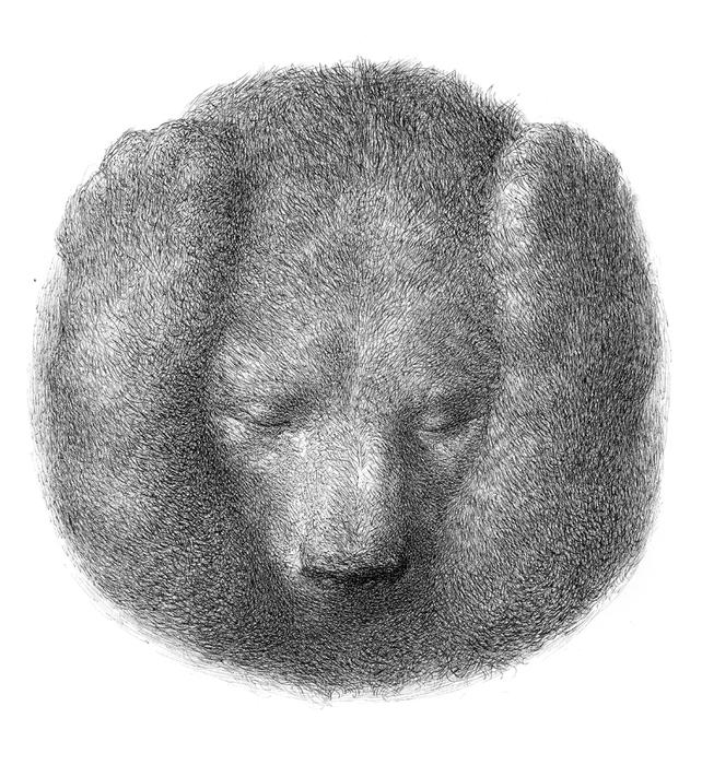 Teddy-land-Kiril-Zlatkov-When-I-Want-To-Say-Nothing-05 (642x700, 273Kb)