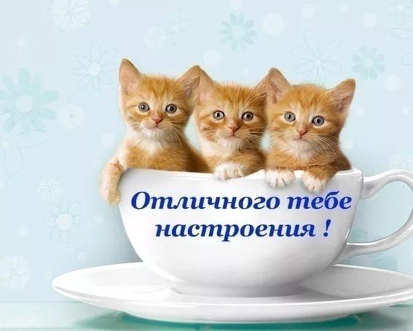 3387964_i_2 (600x480, 31Kb)