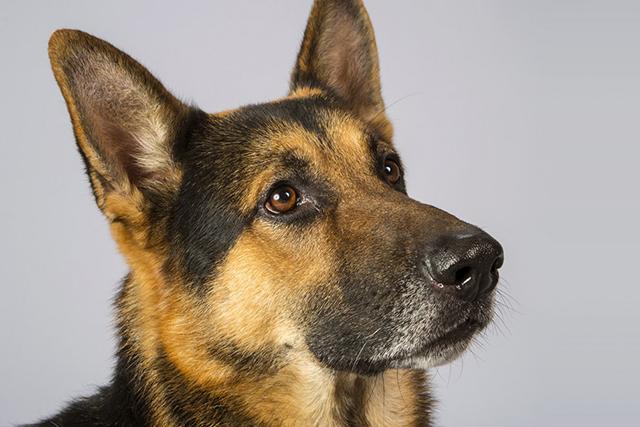 dog (640x427, 197Kb)
