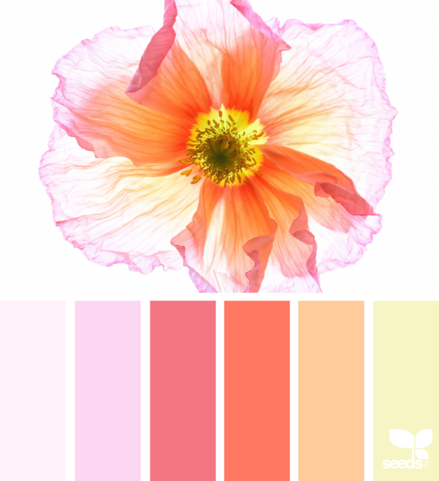 1_13_2ColorFlora_Tracey2 (639x700, 336Kb)