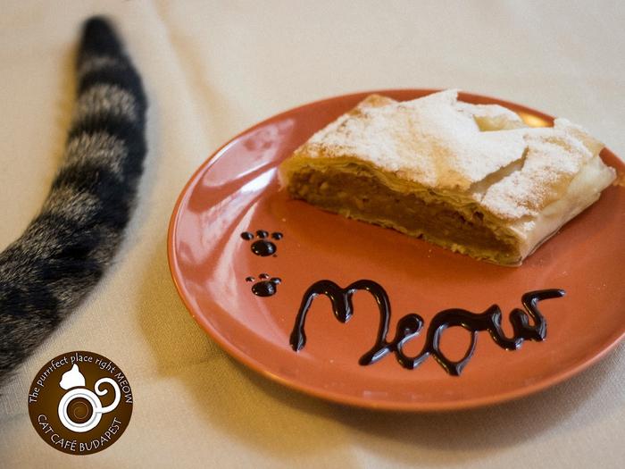 кафе с кошками будапешт 3 (700x525, 378Kb)