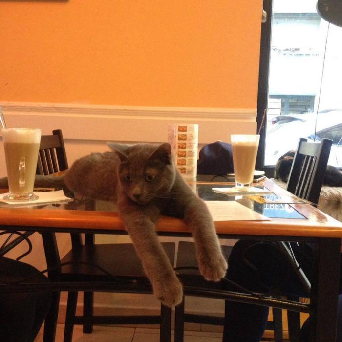 кафе с кошками будапешт 5 (700x700, 404Kb)