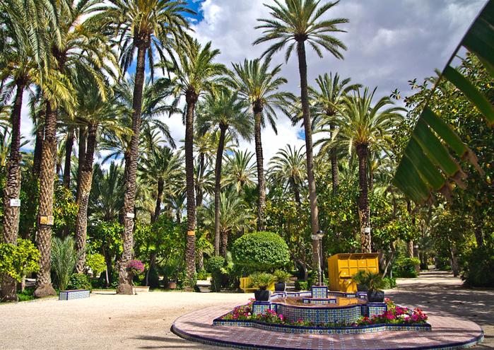 пальмовые рощи эльче 1 (700x495, 662Kb)