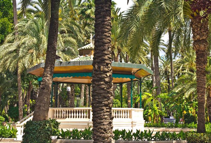 пальмовые рощи эльче 5 (700x474, 630Kb)