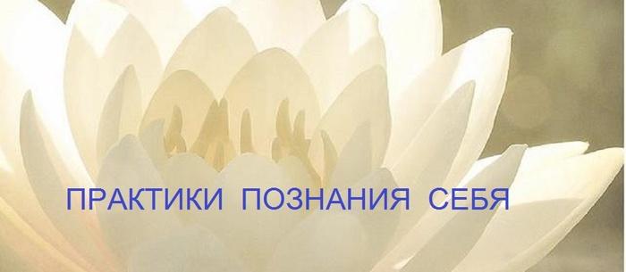 white-lotus7-641x280 (700x305, 49Kb)