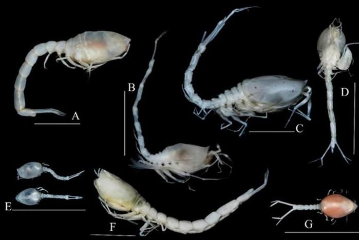 Ученые открыли 500 новых морских организмов по итогам экспедиции 2016 года