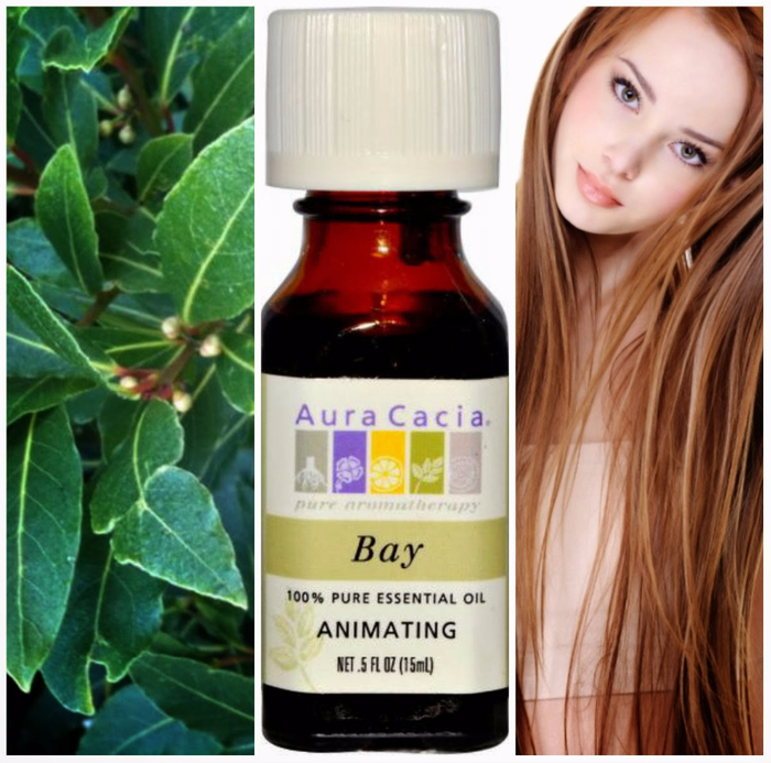 aura-cacia-100-pure-essential-oil-bay (700x693, 458Kb)