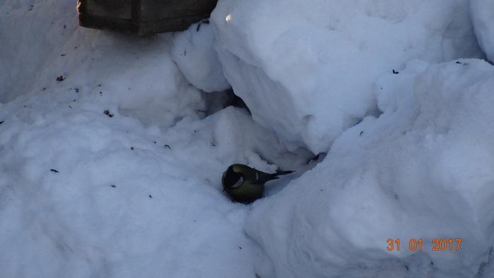 DSC01398синица в снегу (700x394, 55Kb)